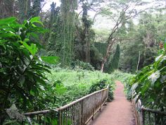 Used to hike Manoa Falls a lot when we lived in Honolulu. Miss it.