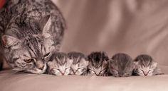 Scatti Di Straordinaria Dolcezza Tra Mamme Gatto E I Loro Teneri Cuccioli