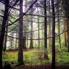#homeland #emmental #switzerland #forest by m_de_berne
