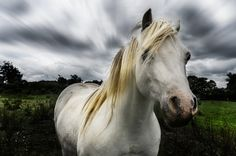 How to Use Photoshop to Create a Dramatic Scene - Example: The Hair Model Horse – Letsimage How To Use Photoshop, Photoshop Tips, Travel Around, Being Used, Ireland, Drama, Scene, Horses, Fantasy