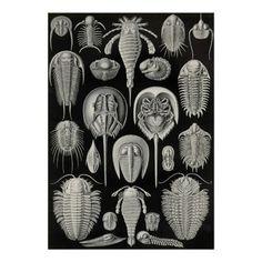 A form of art: Ernst Haeckel,Scientific drawing. A form of art: Ernst Haeckel, Dibujo científico. Art Et Nature, Theme Nature, Ernst Haeckel Art, Natural Form Art, Horseshoe Crab, Jellyfish Art, Science Illustration, Nature Illustrations, Ocean Illustration