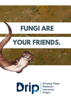Learn FOUR BIG WAYS a stream's slippery slime contributes to the clean water you drink at the Drinking Water Resilience Interactive Project (DRIP). #NCwater