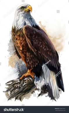Illustration about The bald eagle watercolor painting. Illustration of eagle, animal, wildlife - 92254126 Bird Drawings, Animal Drawings, Drawing Birds, Aigle Animal, The Eagles, Bird Kite, Eagle Wallpaper, Mobile Wallpaper, Eagle Drawing