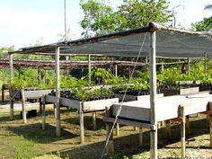 Garden Nursery, Plant Nursery, Green Garden, Shade Garden, Aqua Farm, Plantas Bonsai, Greenhouse Plans, Flower Stands, Industrial Farmhouse