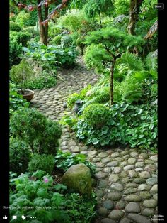 Gorgeous shady garden and rock path