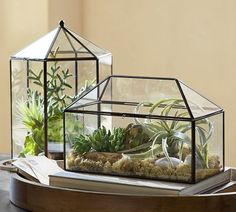 A glass terrarium will allow you to cultivate your own tiny desert oasis at home.