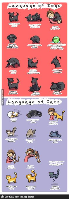 A helpful guide: Language of dogs and cats