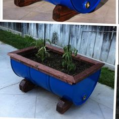 Oil drum planter i made for my sons tomato plants. Red mahogany on blue. Oil Barrel, Metal Barrel, Backyard Projects, Outdoor Projects, Drum Lessons For Kids, Barrel Projects, 55 Gallon Drum, Barrel Planter, Metal Drum