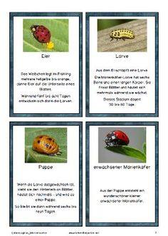 Match the Birds with Their Nests | Animals Birds | Pinterest | Nest ...