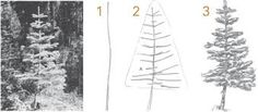 draw trees step by step - Google Search