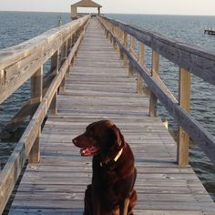 Coco heading to the end of the pier for sunset!!!!