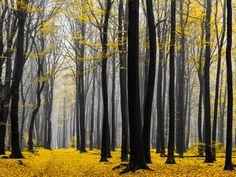 Golden Grove by *tvurk on deviantART
