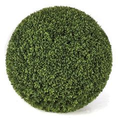 """20"""" or 24"""" Artificial Outdoor Boxwood Topiary Balls for special events and venues.    Commercial quality plant like features Tutone Green Wire frame - hollow interior Limited UV protection Choose between 20"""" and 24"""" round Leaf style only in 20"""" with PVC fabric Don't see what you need?  Call us for further customized products."""