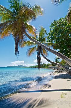 Two Palms, Esperanza, Vieques, Puerto Rico, where my mom and dad had a place!