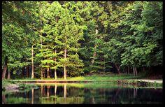 Montauk state park-Salem mo.