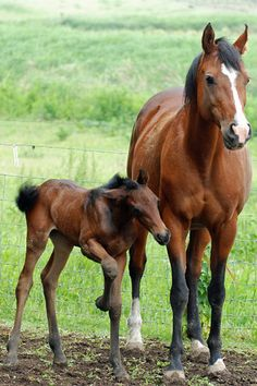 """Mom: """"Look! There's the new colt! Maybe you could go and play with him.""""  Foal: """"He looks too small and scrawny and...""""  Mom (still starring ahead): """"Quit your complaining and be nice!"""""""