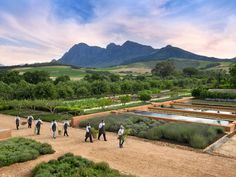 On a recent month-long visit to South Africa's hottest metropolis, JS correspondent Michelle Halpern ventured beyond city limits to uncover 5 great weekend getaways from Cape Town. Here, she shares her favorites from an African safari to wine tasting and much more.