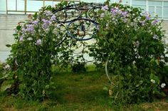 Bike wheel trellis dome - one of 10 unusual trellises eclecticallyvintage.com omg, i need this in my garden