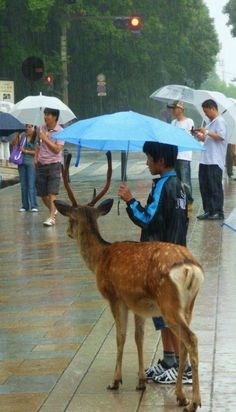 """An act of kindness"" in Nara, Japan , from Iryna"