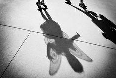 shadow at disney world. try next visit.