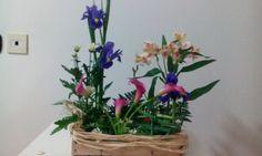 Composizione vegetativa iris, alstromeria, calla mini.