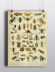 For a boy's bedroom, Antique Insects Science Chart Natural Science Bugs Wall Decor Wall Art Scientific Beetle Entomology History Illustration 8x10 11x14 16x20