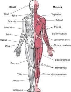 nódulos hepáticos tumor de próstata Wikipedia