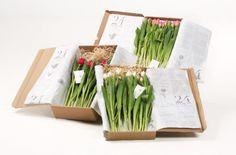 Diseño de Packaging de plantas y flores para regalos. Más ejemplos en: http://www.silocreativo.com/2016/03/packaging-creativos-originales-flores/