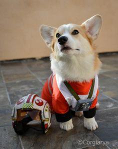 30 dog halloween costumes dog costumes pinterest corgi dog