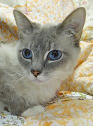 """For more information call the shelter at  812-988-7362 or visit us at 128 South State Road 135, Nashville, IN. For cats that say """"Petco,"""" the pet is available at the PetCo store in Bloomington.  For cats that say """"Foster,"""" the pet is in a foster home, so please call ahead and we'll arrange for the pet to come to the shelter to meet you.  For cats that say """"Courtesy"""", the pet is not a Brown County Humane Society pet, but belongs to someone in the community that must rehome their pet."""