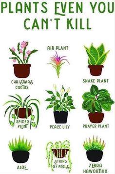 Indoor Garden, Indoor Plants, Indoor Flowers, Indoor Outdoor, Cactus Plants, Garden Plants, Household Plants, Prayer Plant, Pot Jardin