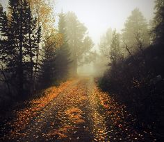 fog and autumn leaves strewn across my path.  these are a few of my favorite things!
