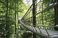 Hängebrücke am Rothaarsteig, Sauerland