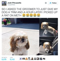 """Aka what Josh, when he saw Mimi, called """"a rat on meth.""""   A Dad Tried To Cut Costs On His Dog's Grooming And Look What Happened, LMAO"""