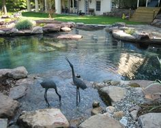 wasserspiel garten Modern Natural Swimming Pools That Will Delight You Swimming Pool Pond, Natural Swimming Ponds, Natural Pond, Swimming Pool Designs, Outdoor Pool, Outdoor Gardens, Outdoor Fountains, Outdoor Decor, Water Features In The Garden