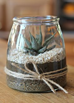 A nice jar, earth, small stones and a succulent and you are ready to make this terribly trendy mini terrarium that will give a natural but modern side to any living room. A cute mini terrarium DIY for Mother& Day Mini Terrarium, How To Make Terrariums, Terrarium Plants, Succulent Terrarium Diy, Glass Terrarium, Terrarium Wedding, Cacti And Succulents, Planting Succulents, Planting Flowers