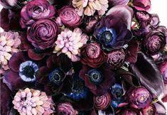 photography, flower, purple,