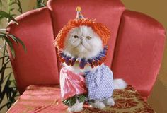 Pin for Later: 26 GIFs Will Make You Feel Insanely Happy A cat in many costumes.