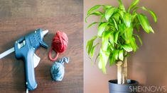 What's yarn bombing, you ask? It's the coolest way to jazz up your houseplants