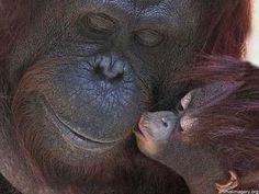 Cute Kiss | Cute Monkey Kiss | Animal Pictures