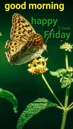 Good Morning Happy Friday, Days Of Week, Language Quotes, Beautiful