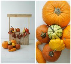 fall photo shoot (backstage); pumpkin