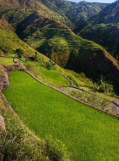 Buscalan Rice Terraces - Kalinga, Luzon, Philippines