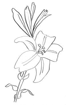12 Meilleures Images Du Tableau Fleur Lys En 2019 Drawings