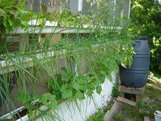 Gutter Gardening...  no more stooping!