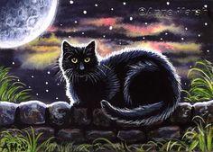 "~ BLACK CAT ~ ""MIDNIGHT WATCH"""