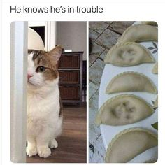 Funny Animal Pictures with Captions to Make You LOL - 34