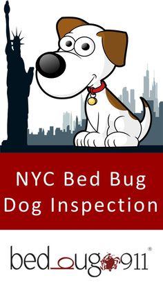 8 Best Best Bed Bug Exterminator In Nyc Bedbug911 Images Cool