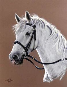 """ KOCHIA "" - Peinture, 65x50 cm ©2005 par laurent frison - PASTEL PONEY PORTRAIT ANIMALIER EQUESTRE HYPER-REALISME Horse Drawings, Realistic Drawings, Animal Drawings, Art Drawings, Painted Horses, Pop Art Wallpaper, Horse Artwork, Most Beautiful Horses, Art Original"