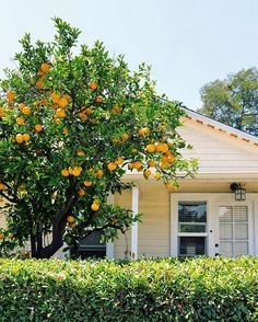 Of all Santa Barbara's amazing properties I'd pick this sweet cottage. 🍊🍊🍊